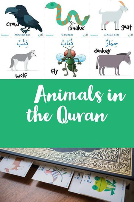 اسامی حیوانات آمده در قرآن quranic animals