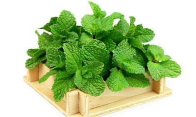 خواص چای نعناع برای زیبایی و سلامتی Mint Health