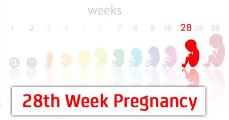 هفته بیست و هشتم بارداری Pregnancy